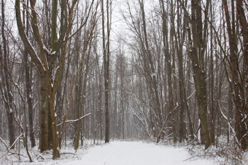 An afternoon hike in the snow