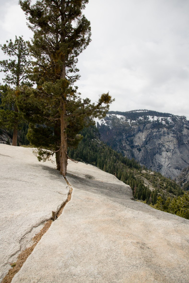 Trees Growing Above Nevada Falls