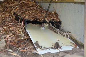 Cahaba Snake Traps example