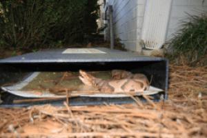 Cahaba Snake Traps vestavia hills snake trap
