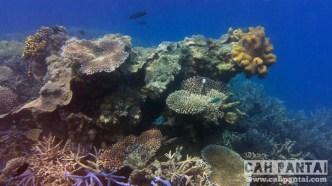 Ekosistem Pulau Sintok