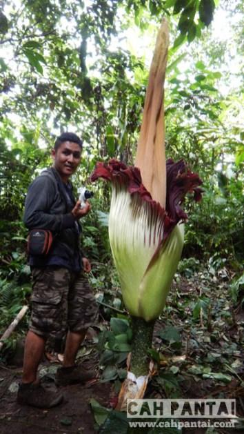 Tak ada rotan akar pun jadi, gak ada Rafflesia nemu bunga bangkai juga boleh dah