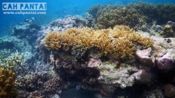 Jika agak berenang menjauh maka akan ditemukan gugusan karang ini