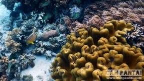 Soft coral juga ada namun tidak dominan