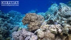 Karang di Sombu Dive... Gua gak berani jalan lebih jauh karena arusnya kuat, tanpa perahu dan hanya sendiri...