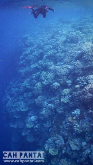 Tumpukan karang menggunung