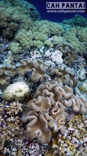 Yg model gini soft coral juga neh Selalu bergerak