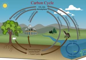 CARBON CYCLE DIAGRAM  Unmasa Dalha