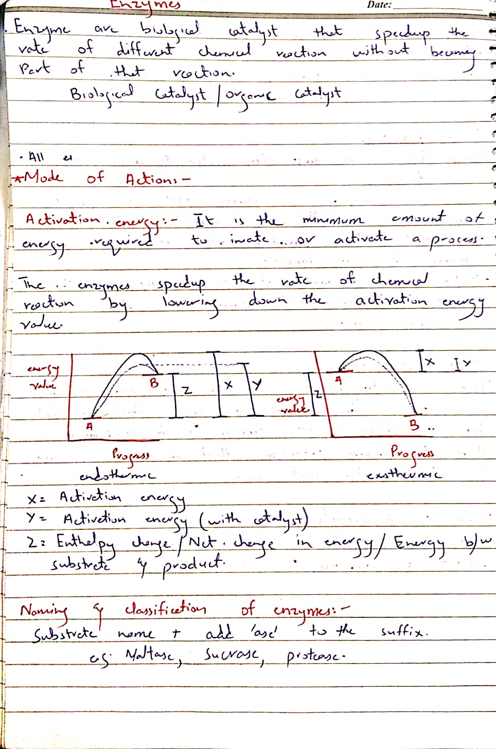 Enzymes._1