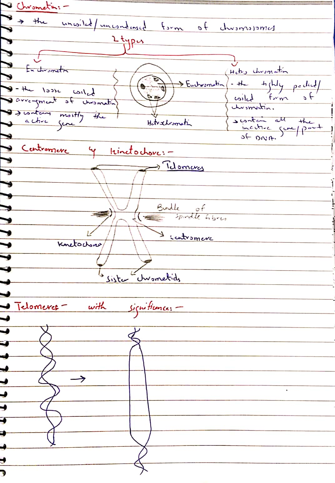 mitotic cycle._7