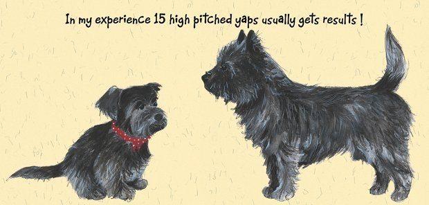 Black Cairn Terrier Greeting Card
