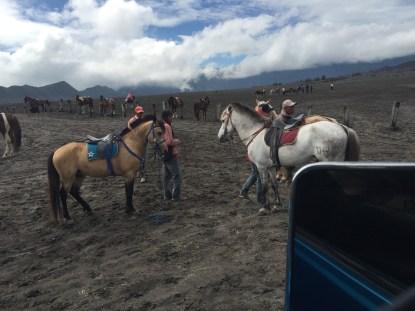 our pony crew