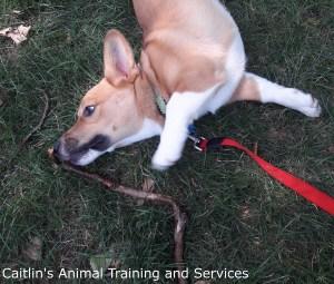 dog treats allentown