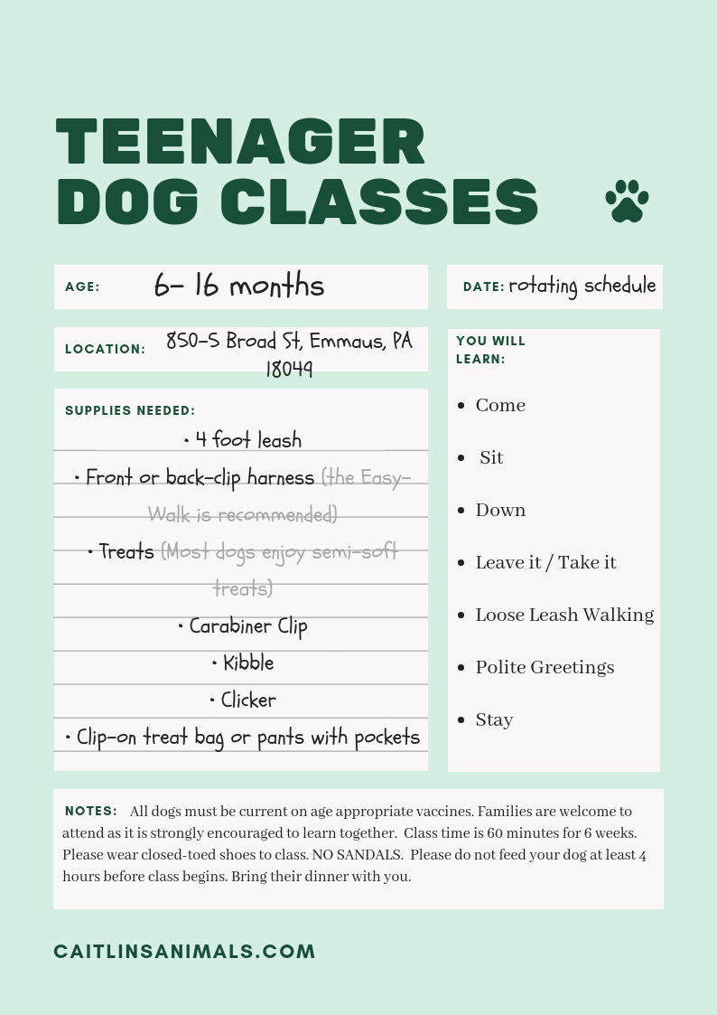 Teenager Dog Classes