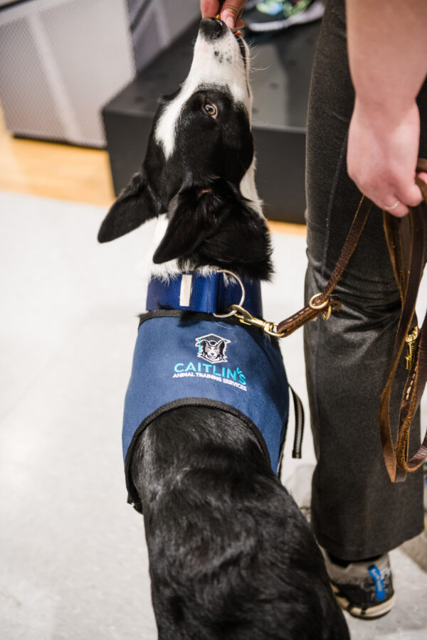Puppy and Service Dog Coaching in the Lehigh Valley