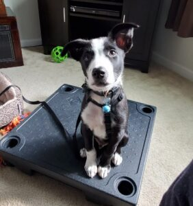 Lehigh valley puppy training