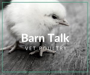 Barn Talk Blog Caitlyn Andrews Vetpoultry