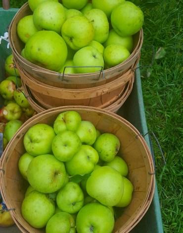 16-apples