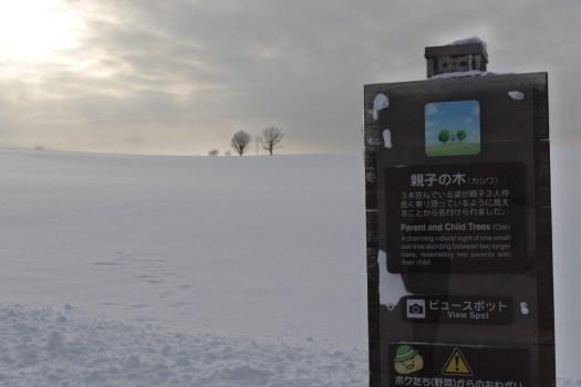 美瑛 雪の親子の木