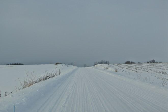美瑛 雪の道路