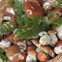 Sagra del fungo Camigliatello