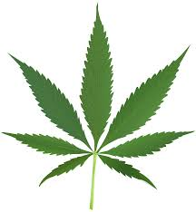 CNBC TV18 Column : Legalising Cannabis