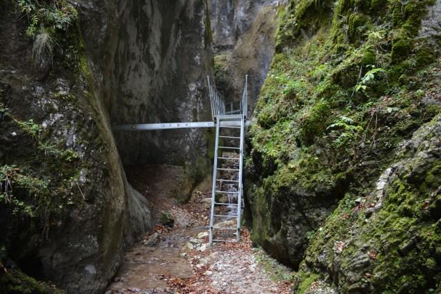 7 scari