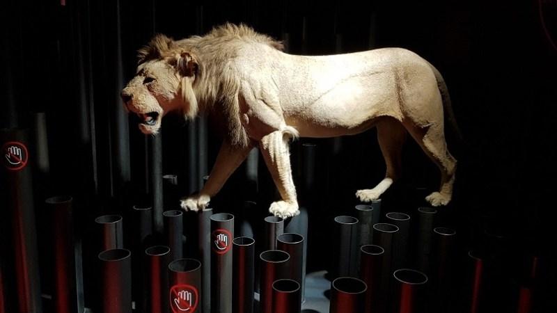 leul din San Mames