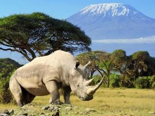 Tanzania-cmj