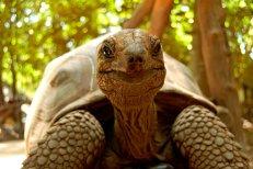 prison-zanzibar-baby-giant-tortoises-cmj