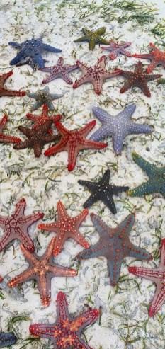 Stele de mare in Zanzibar