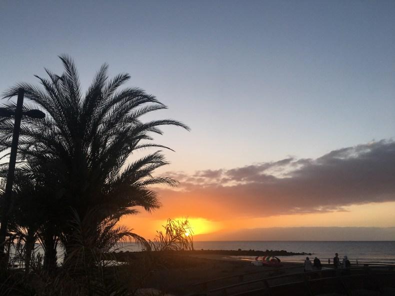 apus boemic pe Tenerife