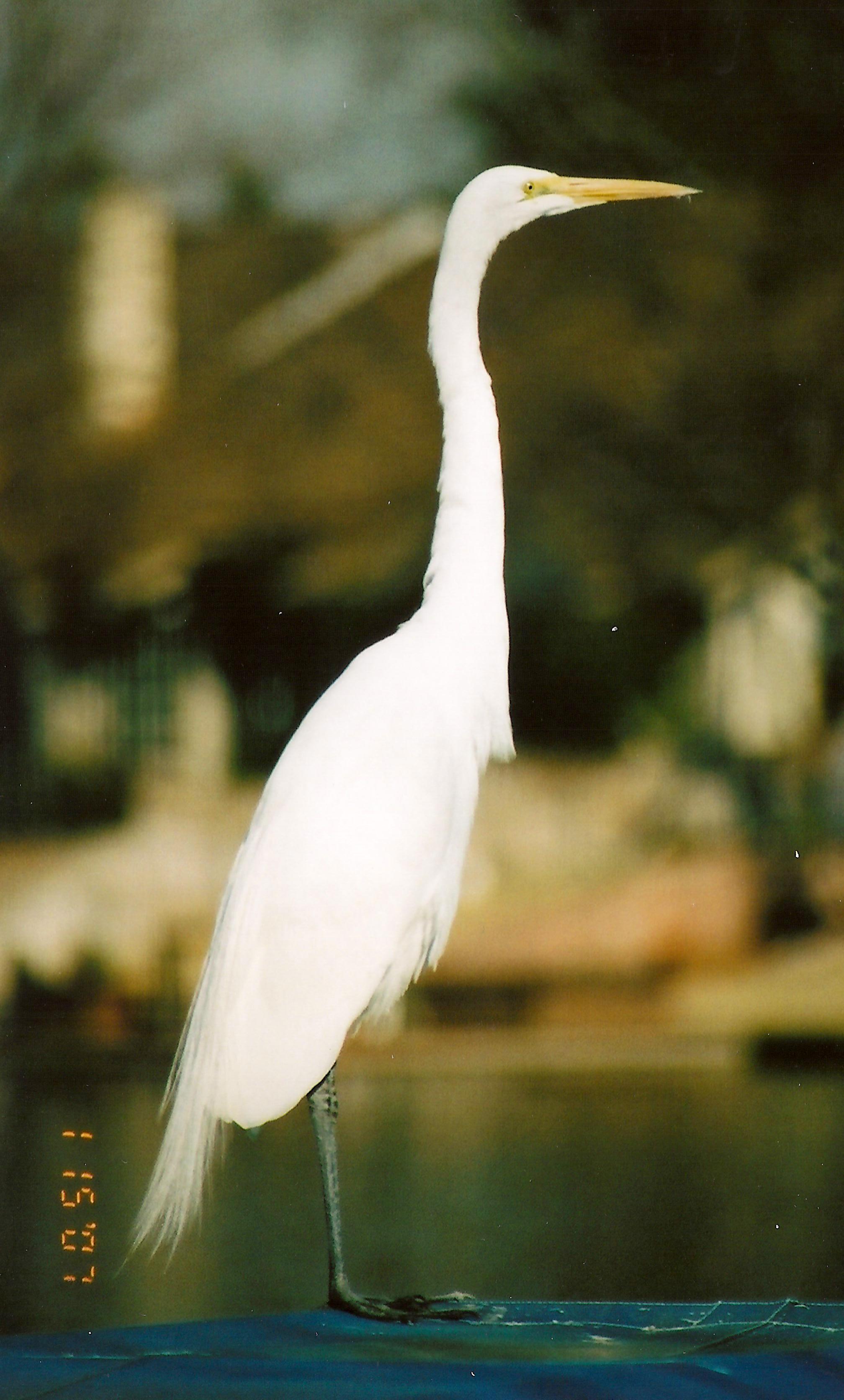 Egret onBoat