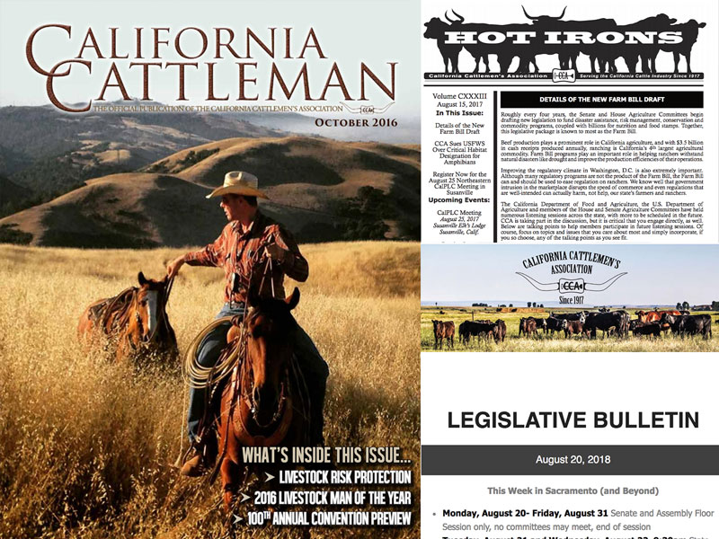 CCA publications