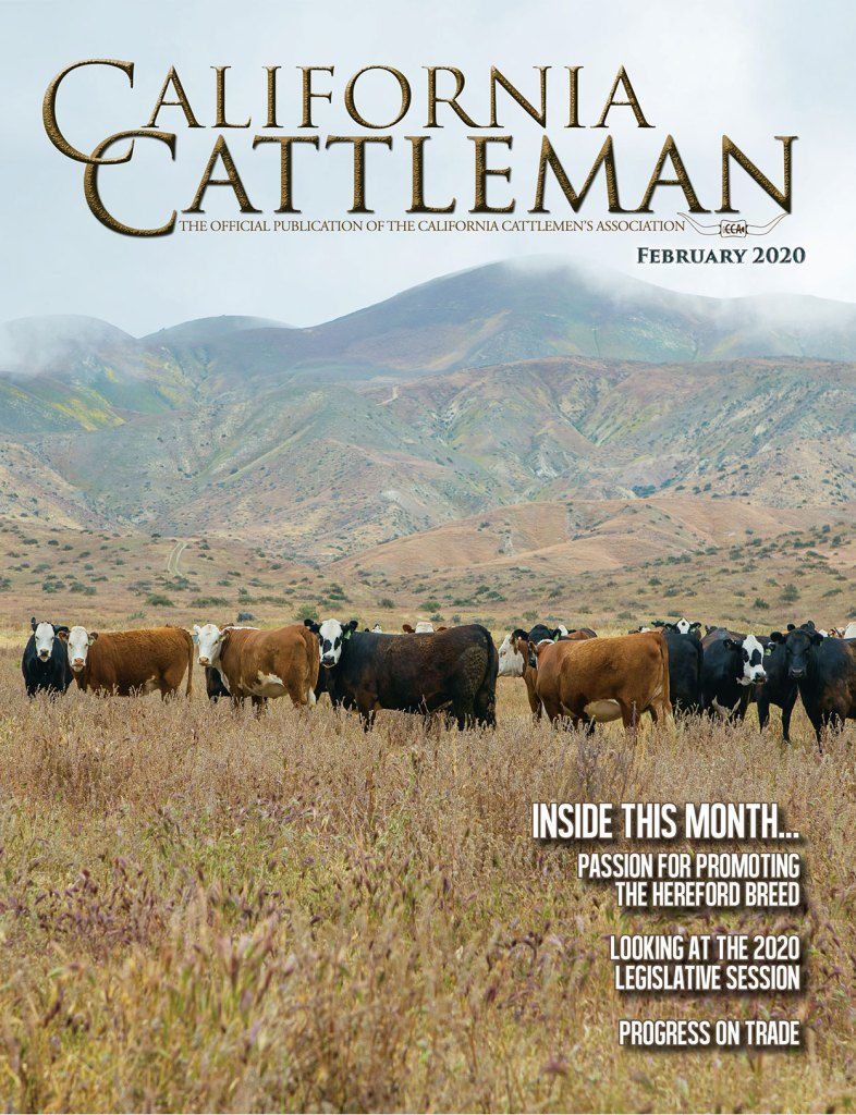 Hereford cattle on the cover of the February California Cattleman