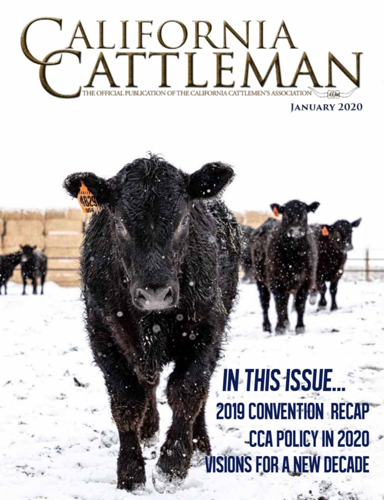 Feedlot cattle in snow on cover of January California Cattleman