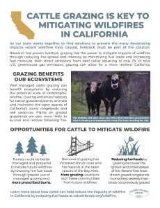 CCA Wildfire Factsheet 2020