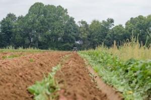 tilled field & hedgerow