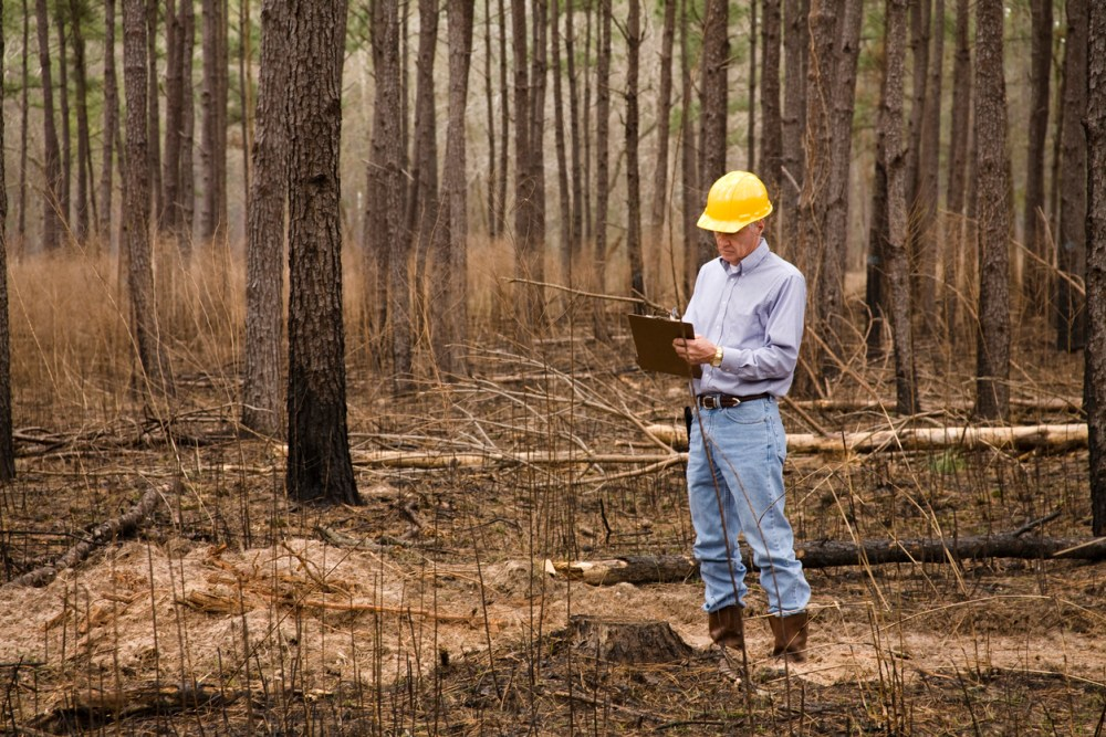 Forester, man wearing hardhat, studying environmental conservation in burned forest