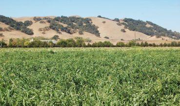 Santa Clara farmland near Gilroy 2