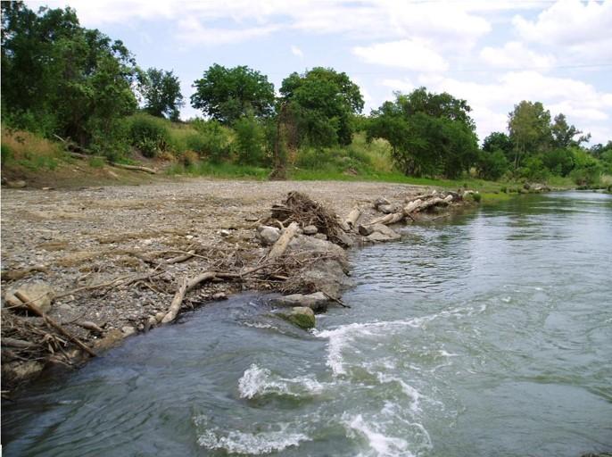 Photo showing eucalyptus logs along Putah Creek which stabilize floodplain edge until native vegetation re-establishes