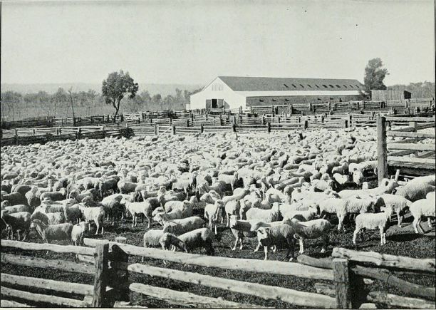 Sheep Farm Australia