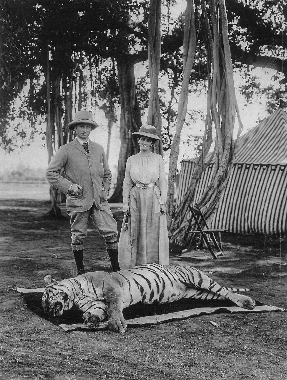 Hunted bengal tiger