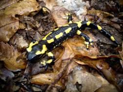 promenade-caleches-camargue-salamandre