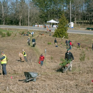 Tree Planting at Gosling Forest