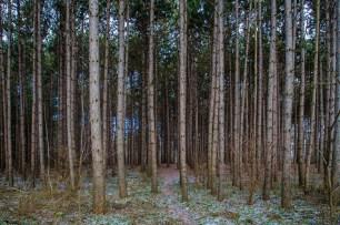 Tall Timbers