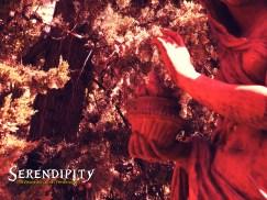 Invierno Serendipity