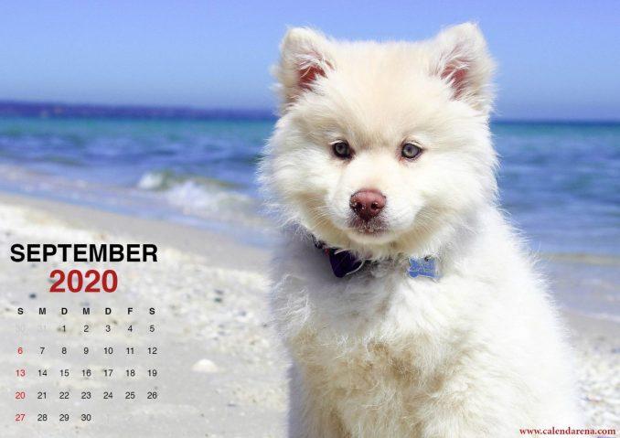 Kalender September 2020 kleiner Welpe