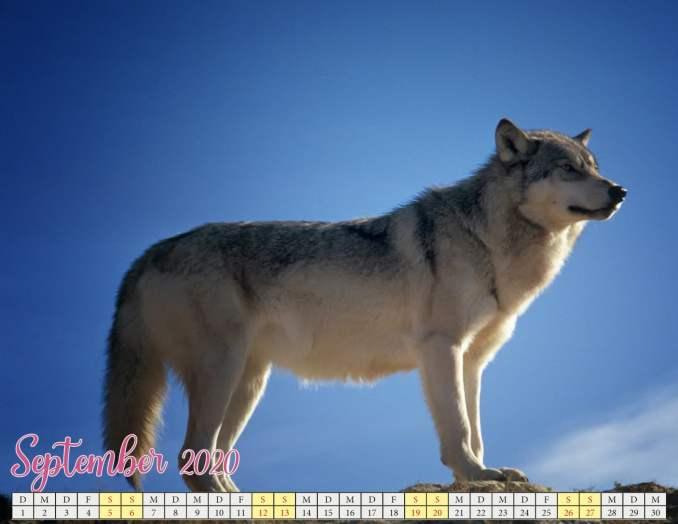 September 2020 Kalender mit Welpen2