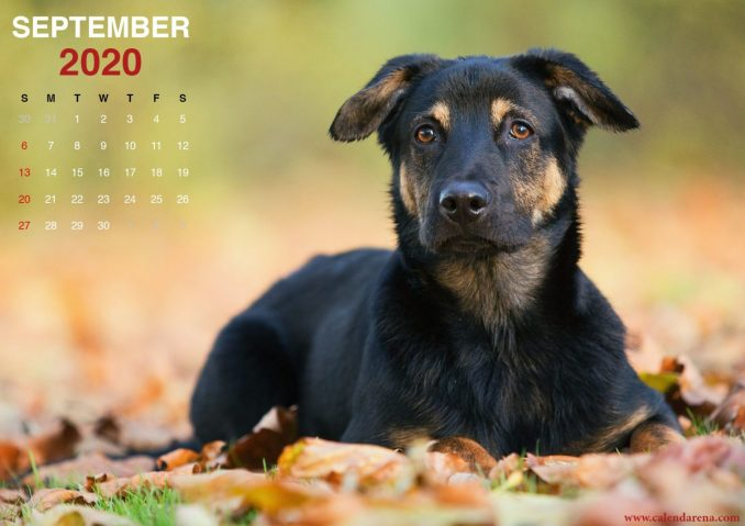 September 2020 calendar for printing little puppies